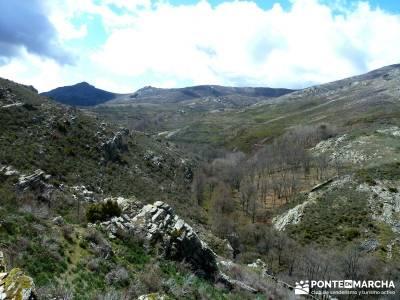 Sierra Alto Rey - Peña Mediodía; senderistas madrid; fruto del tejo;camino de santiago